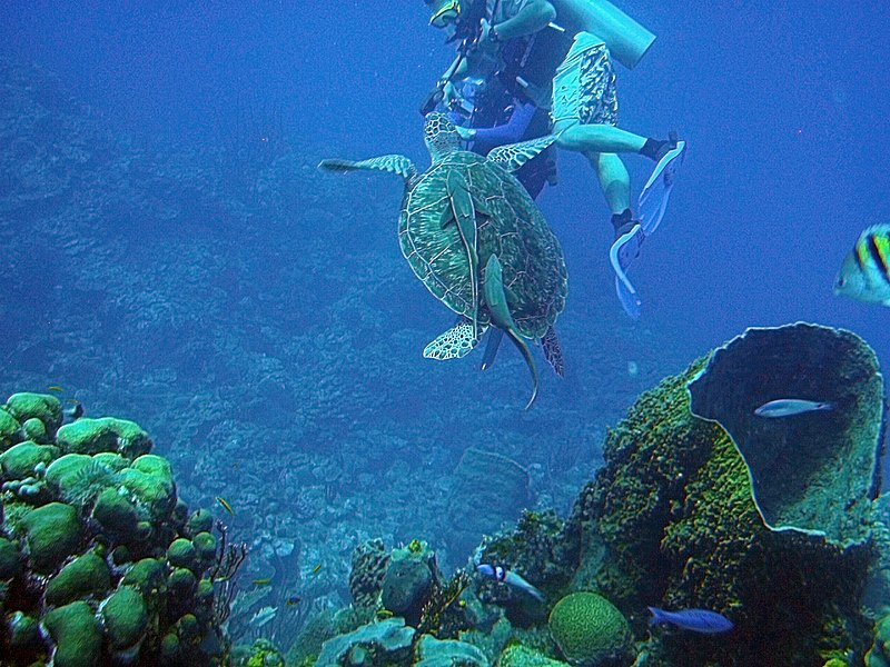 Belize Barrier Reef Ambergris Caye